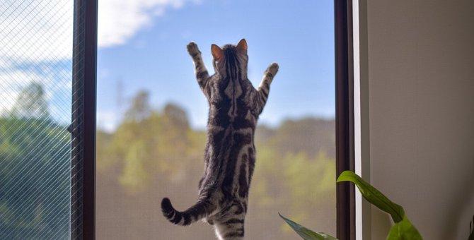 猫はまるでオリンピック選手!驚くべき『身体能力』5選