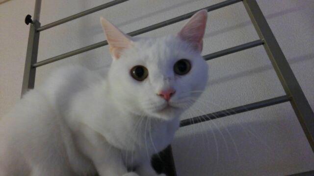 父親が危篤状態になった時、愛猫コタロウに起きた不思議な事
