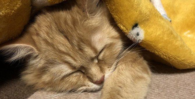 猫が『飼い主の顔の近く』で寝たがる秘密3選