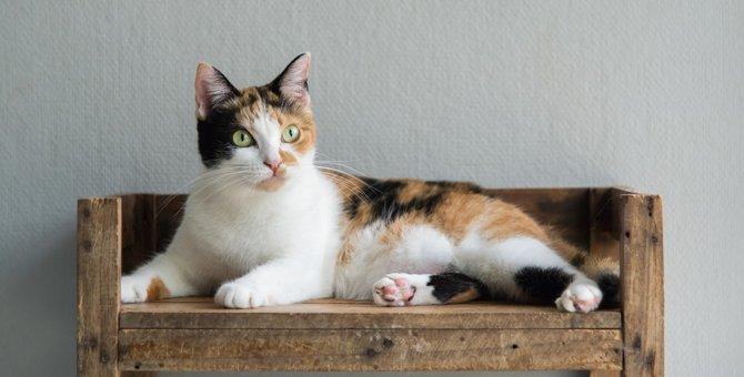 三毛猫の特徴とは?性格や三色の毛色の秘密
