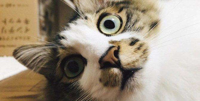 猫がパニックになるのはなぜ?5つの理由と対策