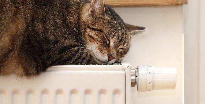 寒い季節に再確認したい!猫に危険な室内の環境3つ