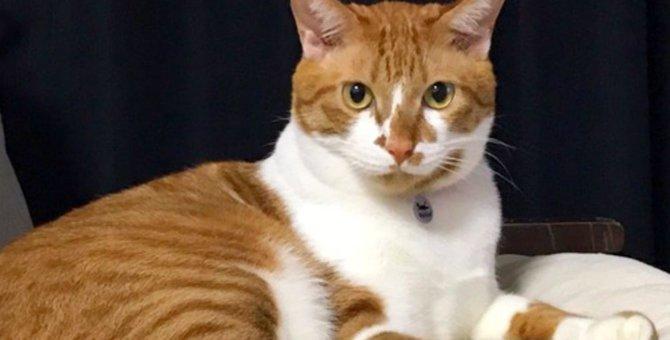 母猫を探して歩き回る子猫…永遠の家族と出会い福々しい姿に!