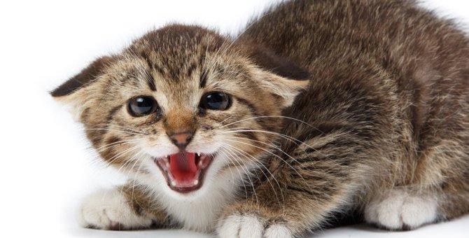 猫の多頭飼いで威嚇してしまう原因や仲良く対面させる方法
