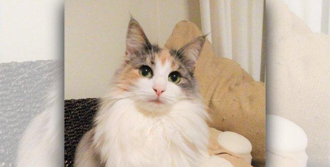 愛猫に好きなごはんを聞いてみた!|LAYLAのペットリーディング