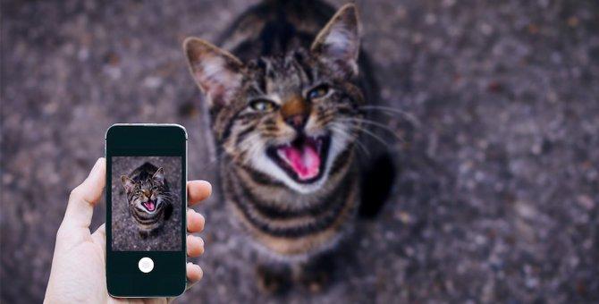 猫探しに役立つアプリとグッズ6選