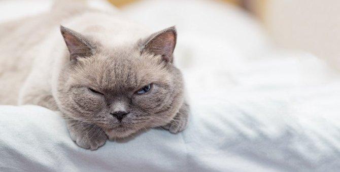 フラストレーションが溜まっている時の猫の仕草3つ