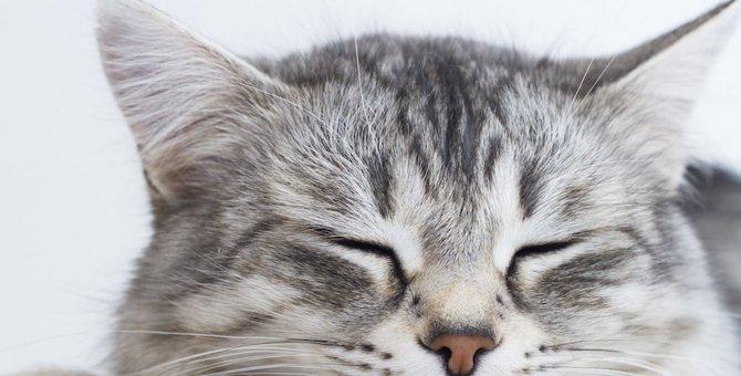 猫の鼻がカサカサ!飼い主ができる乾燥対策とは?