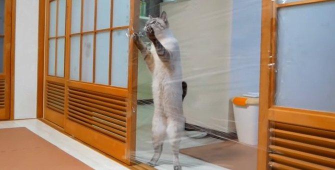 猫ちゃんの前に立ちはだかる見えない壁!ラップトラップに挑戦