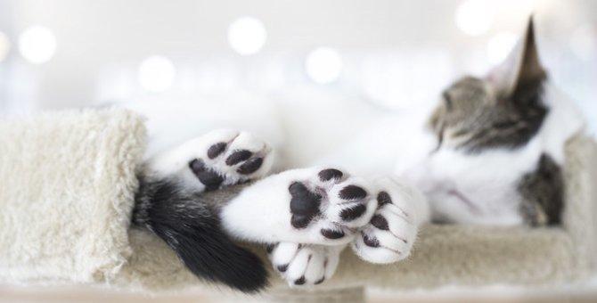 猫が後ろ足を引きずっている!異変の原因と治療法