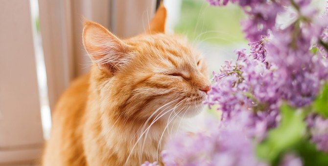 猫がわざと人の足を踏んづけるのはなぜ?3つの理由