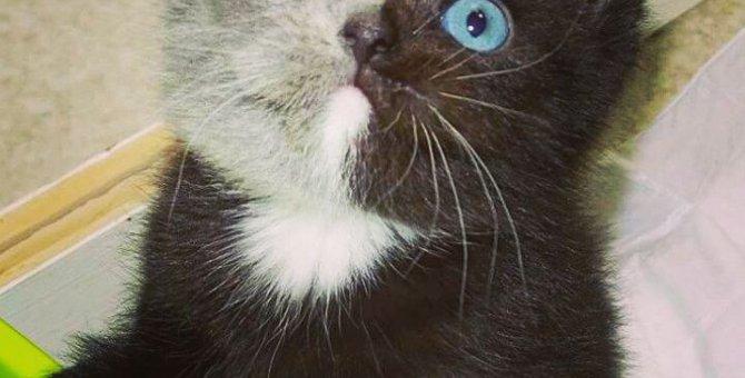 キメラ?1つの顔に2つの顔?!インスタグラムで注目の猫!!