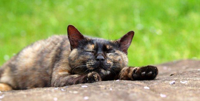 サビ猫の里親になりたい!注意する事や必要な物