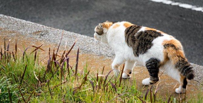 『捨てられた猫』に起こる4つの悲劇
