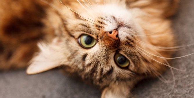 猫の特徴や習性について