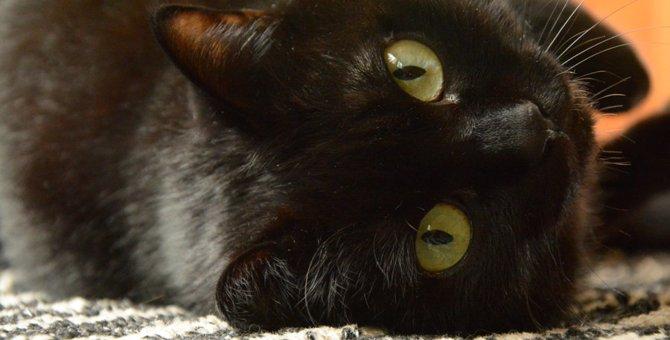 雑種の黒猫はどんな性格?特徴や飼い方