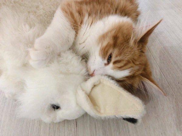 猫が甘えてくるのはなぜ?3つの理由と心配な事