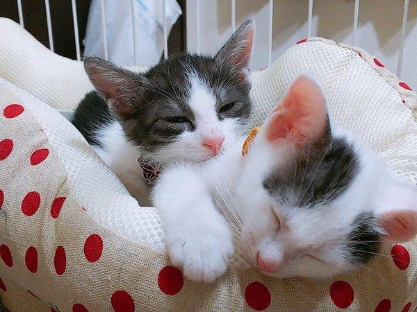 「愛され猫」の共通点3つ