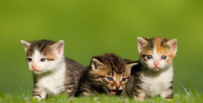 猫の『毛柄』でわかる性格6つ!飼い主との相性を見極める方法とは?