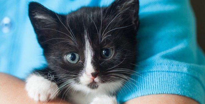猫は飼い主と同じ部屋にいるのが好き?一緒に居たいと思われるための秘訣