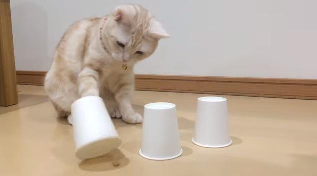 「さぁ、ど~れだ?」フードの入ったカップを当てる名探偵ニャンコ