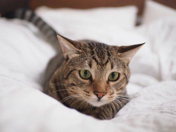 猫の気持ちが良く分かる!しっぽと耳のチェックポイント5個