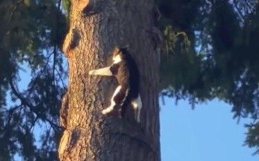 自分を自分でレスキューする猫!?高い木の上で立ち往生の後…