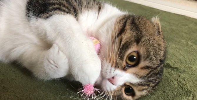 おもちゃに大満足な猫さん!