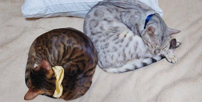 猫の『丸まり方』のパターンでわかる意味3つ