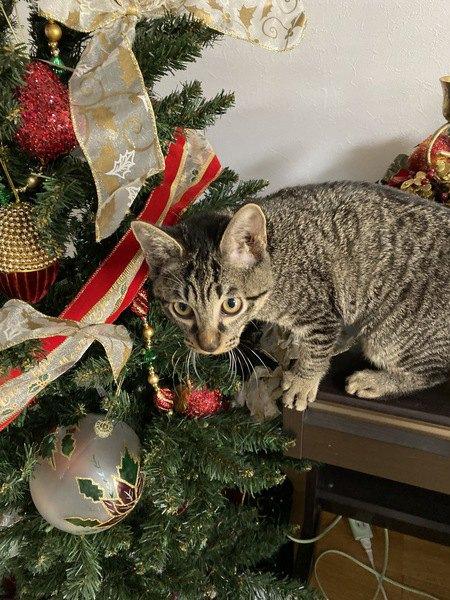 猫に絶対NGな冬の食べ物5つ
