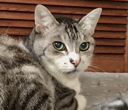 愛猫が長生きするための『5つの条件』