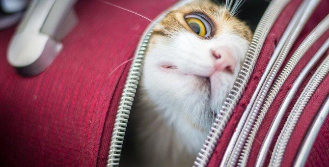 猫が救いを求めてくるときの理由3つ