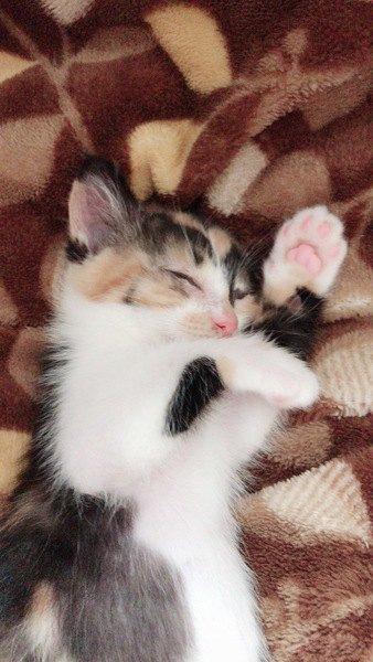 猫は寝ているときにどんな夢を見るの?