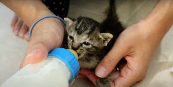 子猫が思うようにミルクを飲まない時は…?