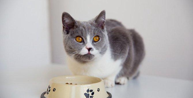 猫がフードを数粒残すのはどうして?6つの理由