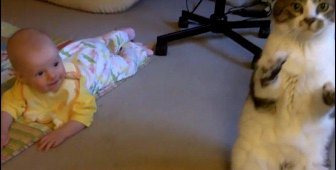「どうしたらいいにょだ!?」赤ちゃんへの接し方が分からずオロオロする猫ちゃん