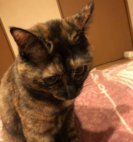 猫が『ごめんね』と思っているときの仕草4つ