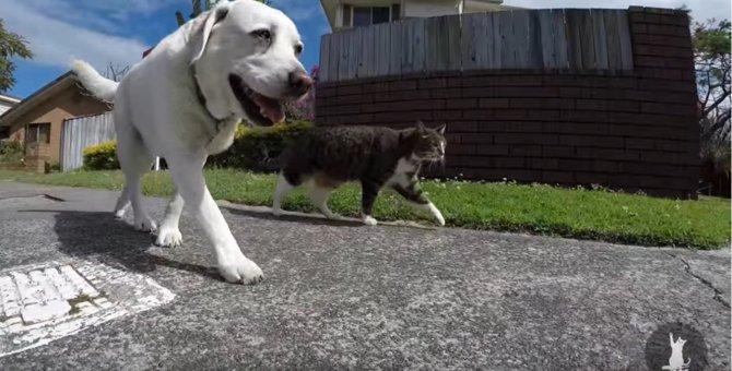 元保護猫ちゃんの外遊び!意外な大親友との友情に胸アツ