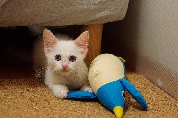 おもちゃを洗濯したときの猫の反応とは!?