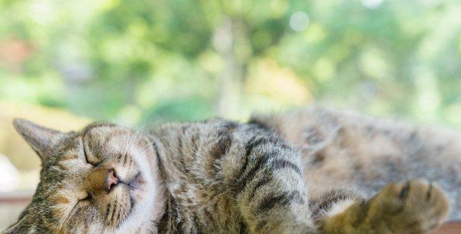 緊張する猫をリラックスさせる6つの方法