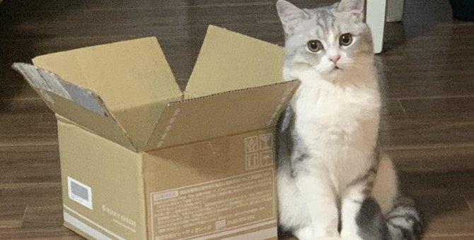 万が一の避難に備えて!猫の飼い主が準備すべき『防災グッズ』3選