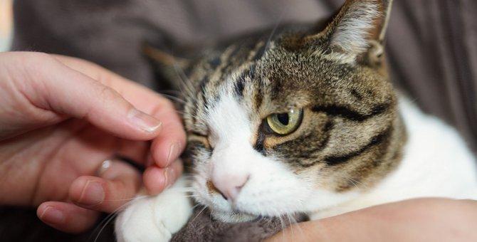 猫から『恨まれる人』がしている4つのタブー行為
