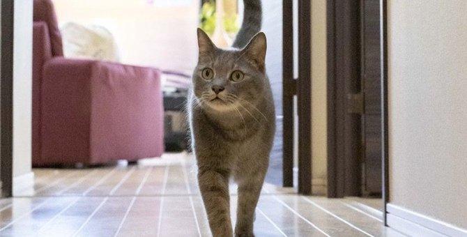 猫が『しっぽの角度』で表している感情3つ