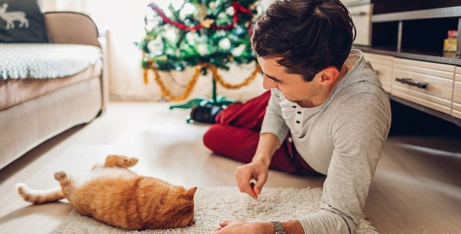 猫の名前を呼んでも無視される9つの理由