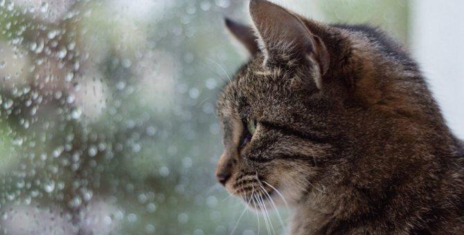 猫が梅雨時期にかかりやすい病気4つ