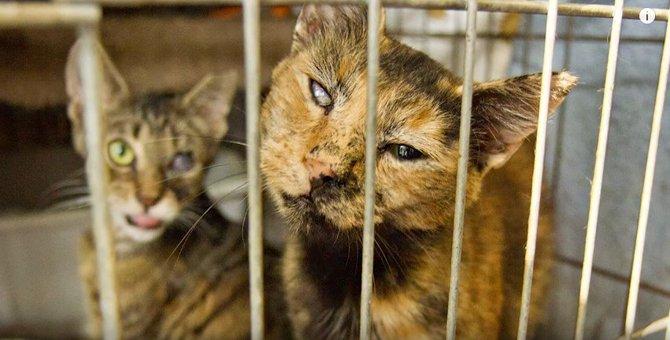 猫屋敷の劣悪な環境の映像に「うちの子」の姿…涙
