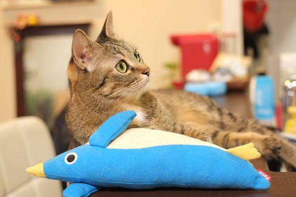 猫と一緒に暮らすための家づくりのポイント5つ
