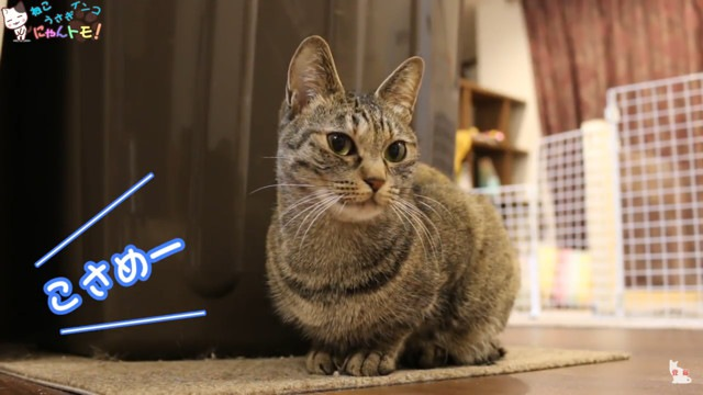 飼い主さんによって態度がかわる猫
