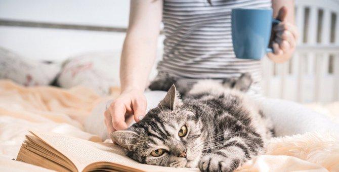 猫が触らせてくれなくなったときに考えられる理由5つ