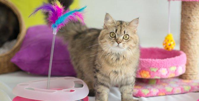 猫の遊び道具ってどんなものがあるの?